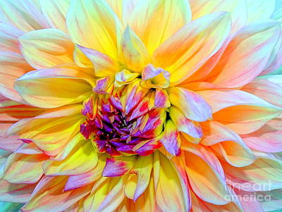Photograph - Blooming Beauty by Ed Weidman