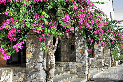 Photograph - Blooming Bougainvillea by Teresa Zieba