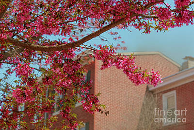 Photograph - Blooming Branch View In Borough Of West Chester by Sandy Moulder