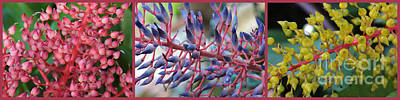 Photograph - Blooming Bromeliads Collage by Carol Groenen