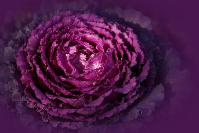 Photograph - Blooming Cabbage by Angie Tirado