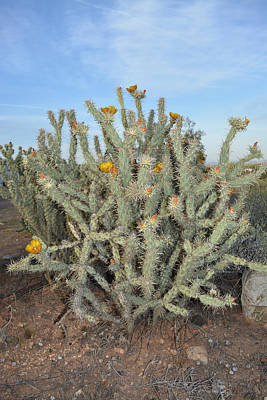 Photograph - Blooming Cactus by Aimee L Maher Photography and Art Visit ALMGallerydotcom