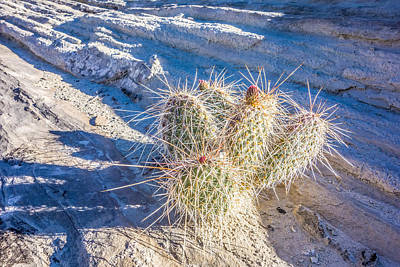 Design Turnpike Vintage Farmouse - Blooming Cactus In Arizona Desert by Alex Grichenko