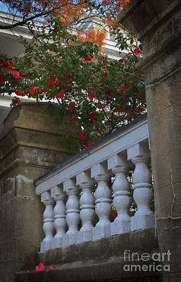 Photograph - Blooming Charleston, Sc by Skip Willits