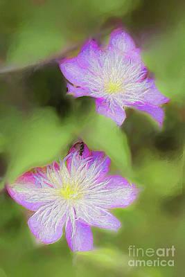 Digital Art - Blooming Clematis Ap by Dan Carmichael