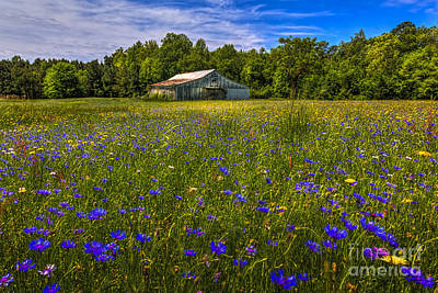 Barbed Wire Fences Photograph - Blooming Country Meadow by Marvin Spates