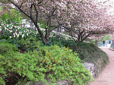 Photograph - Blooming Crabtrees by Kathie Chicoine