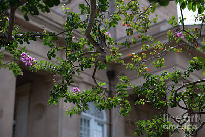 Photograph - Blooming Crepe Myrtle by Dale Powell