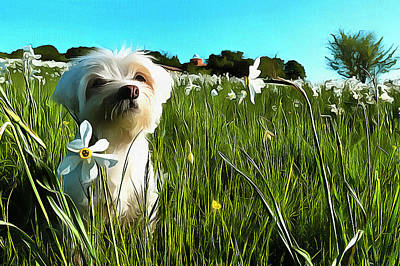 Painting - Blooming Daffodils In The Antola Park With Maltese I Paint by Enrico Pelos