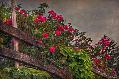 Photograph - Blooming Fence by Hanny Heim