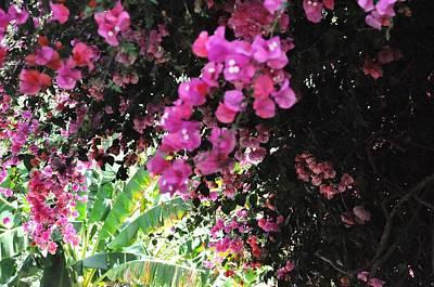 Blooming Glory Original