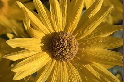 Photograph - Blooming In My Ditch by J R Seymour