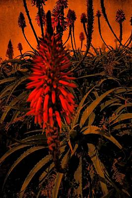 Photograph - Blooming In The Dark 02 by Dora Hathazi Mendes