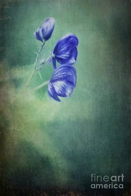 Larkspur Photograph - Blooming In The Dark by Priska Wettstein