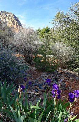 Photograph - Blooming Iris Sedona by Marlene Rose Besso