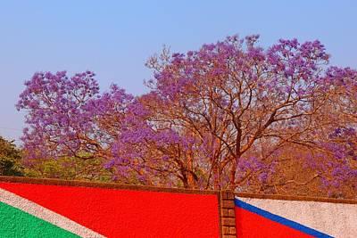 Photograph - Blooming Jacaranda 01 by Dora Hathazi Mendes