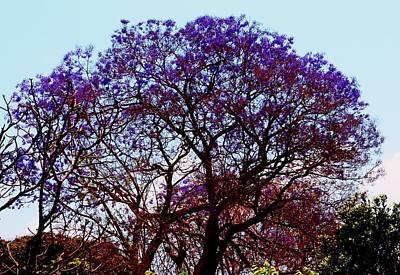 Photograph - Blooming Jacaranda 02 by Dora Hathazi Mendes