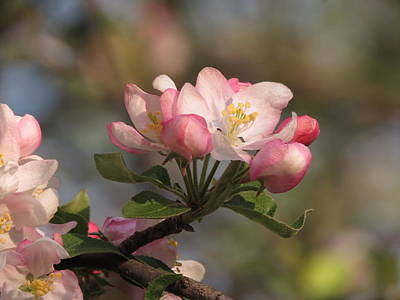 Photograph - Blooming by Kimberly Mackowski