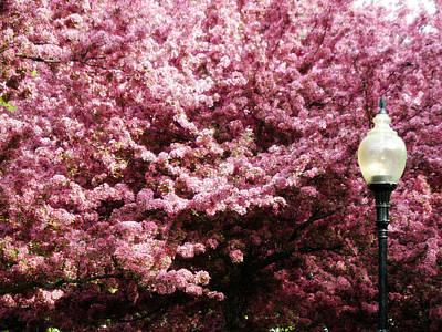 Photograph - Blooming Light by Cyryn Fyrcyd