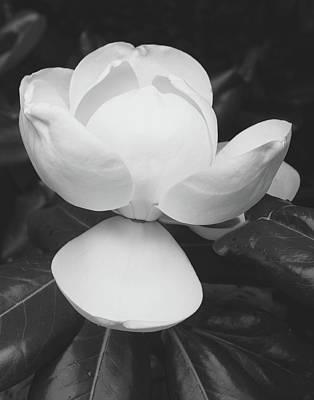 Mixed Media - Blooming Magnolia- Art By Linda Woods by Linda Woods