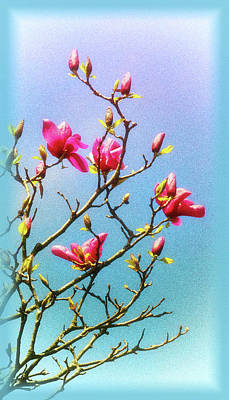 Photograph - Blooming Magnolia by Carolyn Derstine