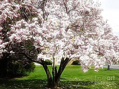 Photograph - Blooming Magnolia Tree Energy Flow Abstract by Rose Santuci-Sofranko