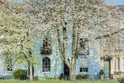 Photograph - Blooming Oxford by Tim Gainey