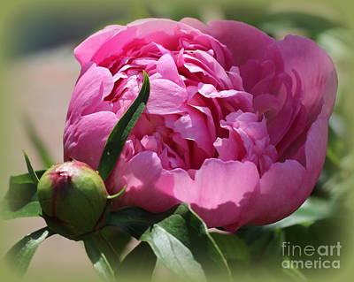 Blooming Pink Peony Art Print