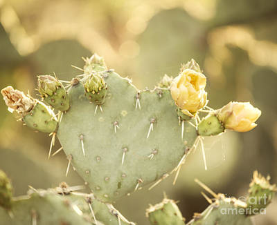 Prickly Pear Photograph - Blooming Prickly Pear Cactus by Juli Scalzi
