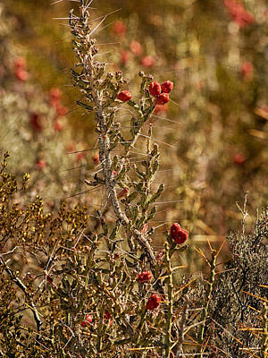 Photograph - Blooming Red Cactus by Charles McKelroy