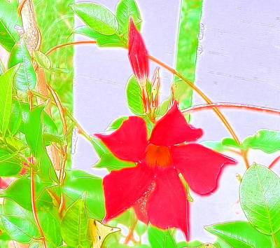 Photograph - Blooming Red Mandeville by Belinda Lee