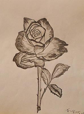 Studio Shot Drawing - Blooming Rose by Felicia Tica