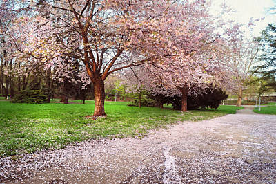 Photograph - Blooming Sakura Blessings by Jenny Rainbow