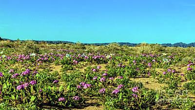Photograph - Blooming Sand Verbena by Robert Bales