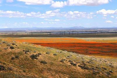 Photograph - Blooming Season In Antelope Valley by Viktor Savchenko