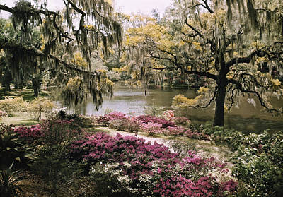Blooming Shrubs And Trees Art Print by B. Anthony Stewart