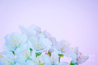 Photograph - Blooming Spring Flowers by Anna Om