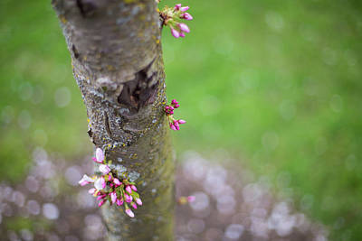 Photograph - Blooming Up And Down by Kunal Mehra