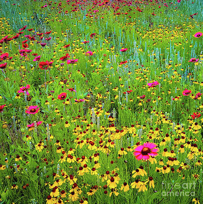 Art Print featuring the photograph Blooming Wildflowers by D Davila