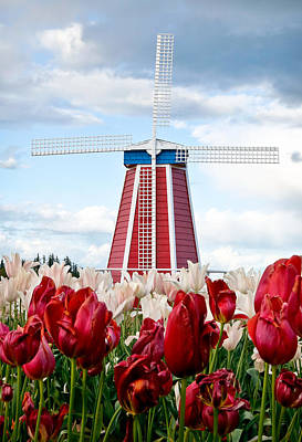 Photograph - Blooming Windmill by Athena Mckinzie