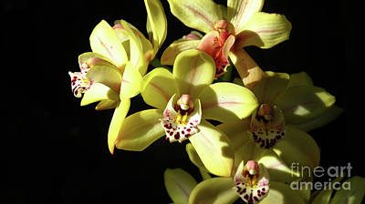 Photograph - Blooming Yellow And Red Orchids by Ruth Jolly