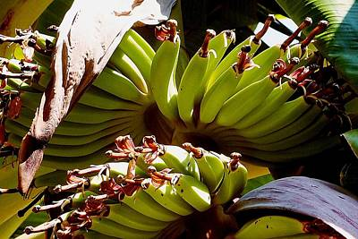Photograph - Blooming Banana Tree 06 by Dora Hathazi Mendes