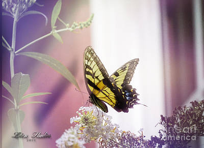 Photograph - Blooms And A Butterfly by Melissa Messick