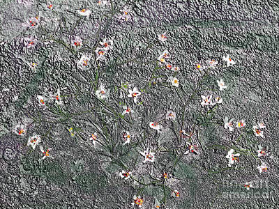 Blooms In Stone Art Print