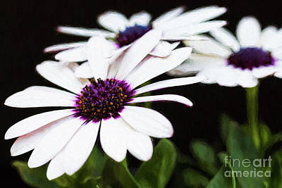 Photograph - Blooms Of Three by Lori Dobbs