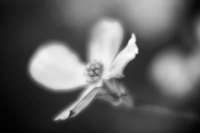 Photograph - Blossom-2-bw by Joye Ardyn Durham