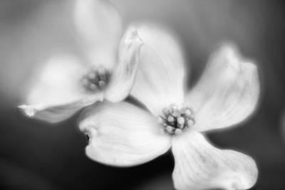 Photograph - Blossom-3-bw by Joye Ardyn Durham