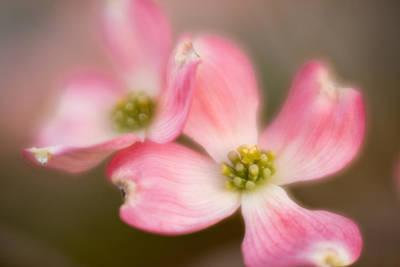 Photograph - Blossom-3 by Joye Ardyn Durham