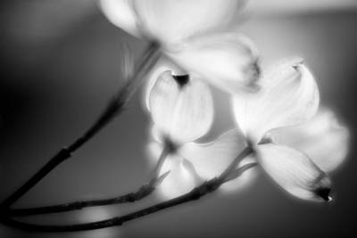 Photograph - Blossom-5-bw by Joye Ardyn Durham
