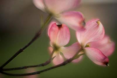 Photograph - Blossom-5 by Joye Ardyn Durham